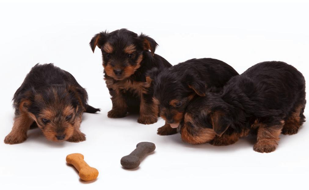 Hundefutter für Allergiker von Sanoro