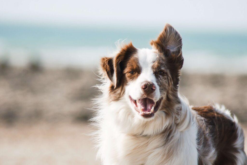 Dörrfleisch Hund
